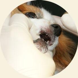 歯科5.jpg