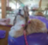 dogfitness pic1.JPG