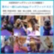 ドッグフィットネス体験会お申込み・お問い合わせ.jpg