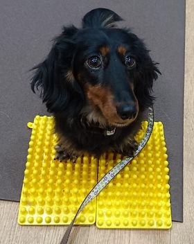 dog fitness mira