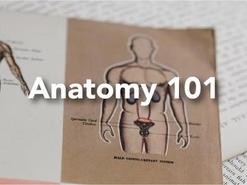 Anatomy 101