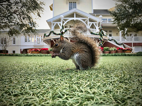 Squirrel and House.jpg