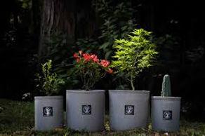 plantmatter1.jpg