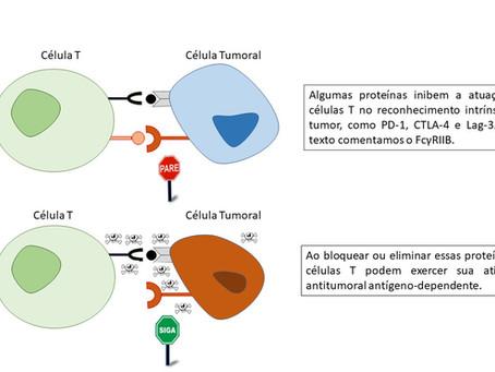 FcγRIIB em células T – uma nova abordagem na terapia de bloqueio de checkpoint?