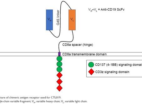 Doenças auto- imunes: um novo campo para as células CAR-T