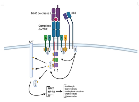 Modulando domínios de ativação das células CAR-T: menos é mais?