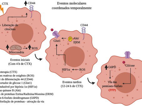 Plasticidade fenotípica de células tumorais na tolerância a quimioterápicos