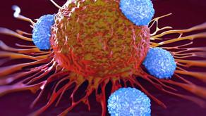 Licença para matar: O caso das células CD4 citotóxicas