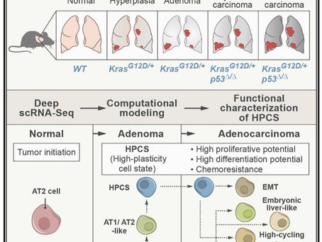 O surgimento de um estado de alta plasticidade celular é capaz de promover progressão tumoral