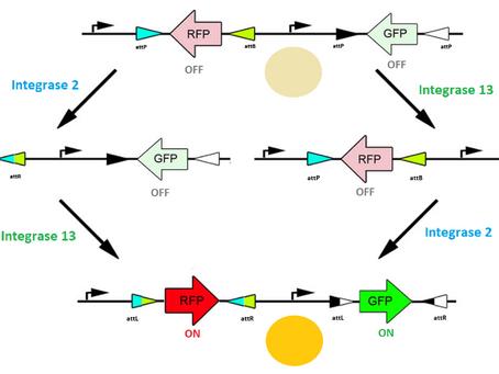 Ligando e desligando genes – avanços em Biologia Sintética