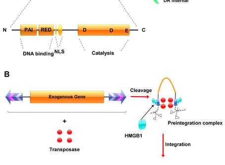 Engenharia genética sem transfecção?
