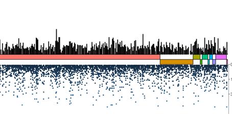 Estudo da genética das populações e o desfecho relacionado à COVID-19