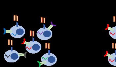 Perfil transcricional, cinética e diversidade clonal em pacientes submetidos a terapia CAR-T