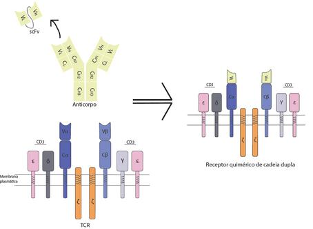 Como a terapia com células CAR-T foi desenvolvida?