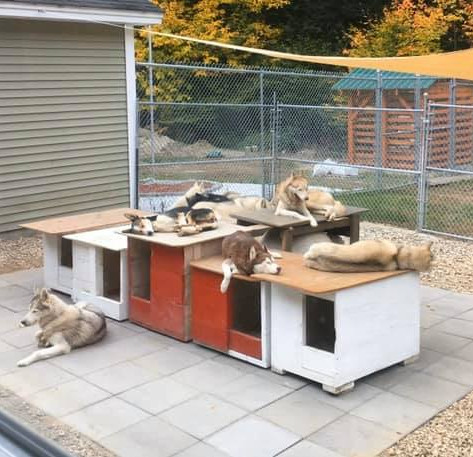 Kennel Patio