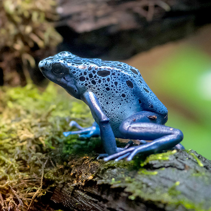 *SOLD OUT* - Edventure Academy: Awesome Amphibians (Ages 3-5)