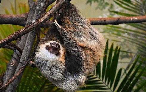 Sloth 2.0.jpg