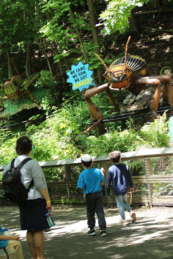 Syracuse Zoo RGZ Big Bugs! Bombardier Beetle Grasshopper