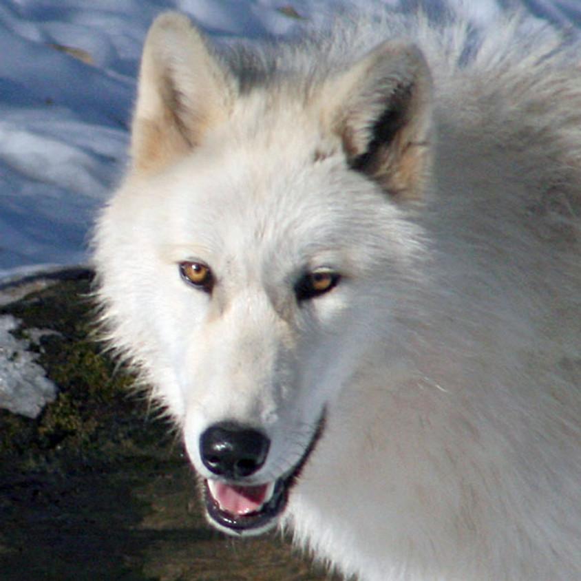 Virtual Zoo to You: Winter Survival Skills
