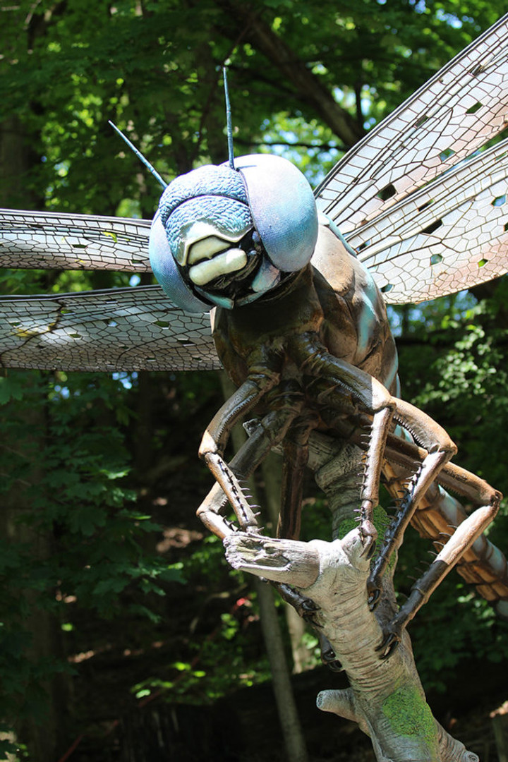 Syracuse Zoo RGZ Big Bugs! Blue-Eyed Darner
