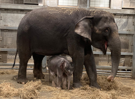 Thrilled to be welcoming a new baby to the Rosamond Gifford Zoo