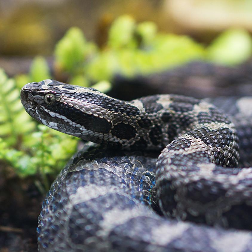 Virtual Zoo To You: Native Animals