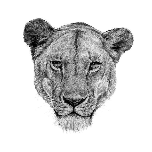 Lioness (Detail)