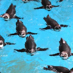 「九州の自然・風景・祭り」長崎ペンギン水族館
