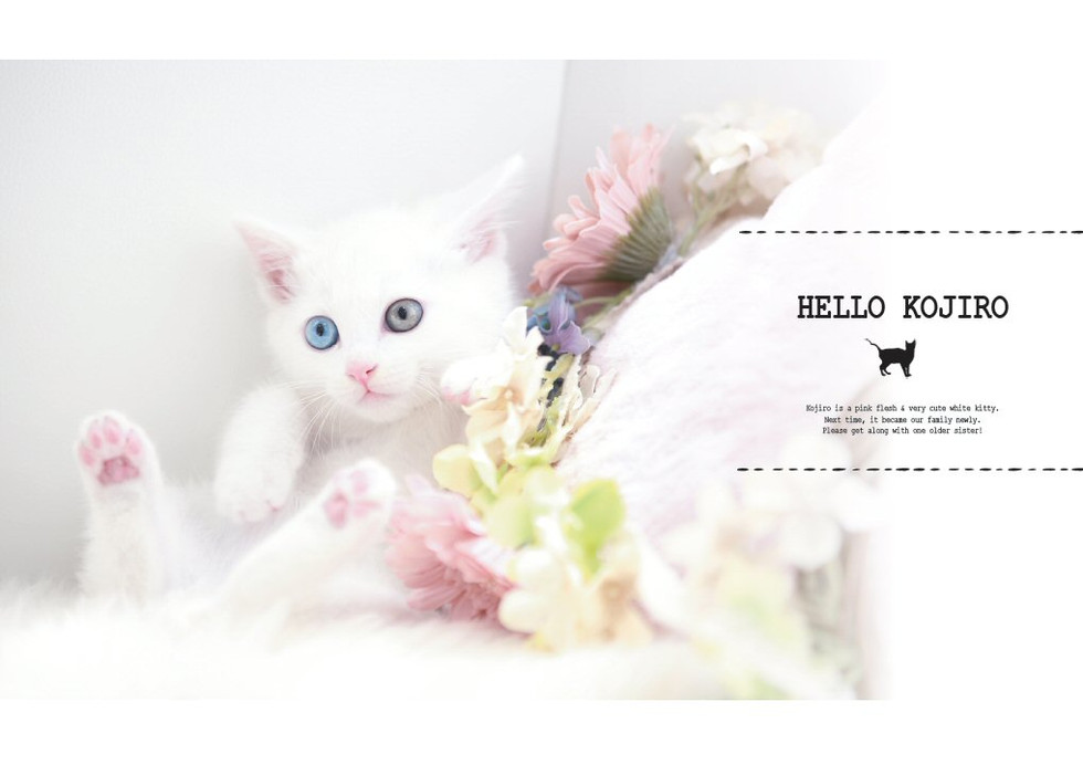 HELLO KOJIRO_お座り