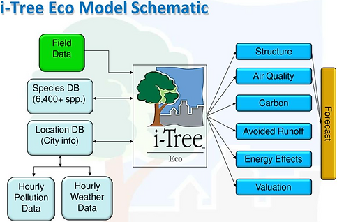 28_iTree_Eco_17Sept20.png