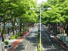 41_Street_tree_Omotosando_22Sept20.png