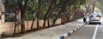 39_Street_tree_Pune_22Sept20.png