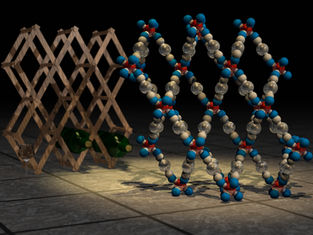 Negative compressibility in a molecular wine rack