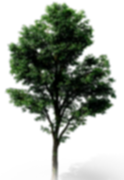 TREE%201_edited.png