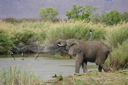 Marataba_Elephant
