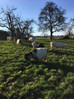 Family Potluck & Tree Planting at Hof Narr