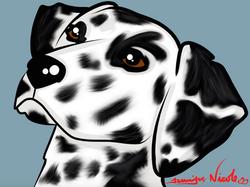 3-15-15 Dalmatian
