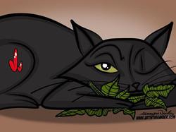8-14-17 Mmmmm Catnip
