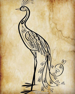 4-9-18 Peacock.