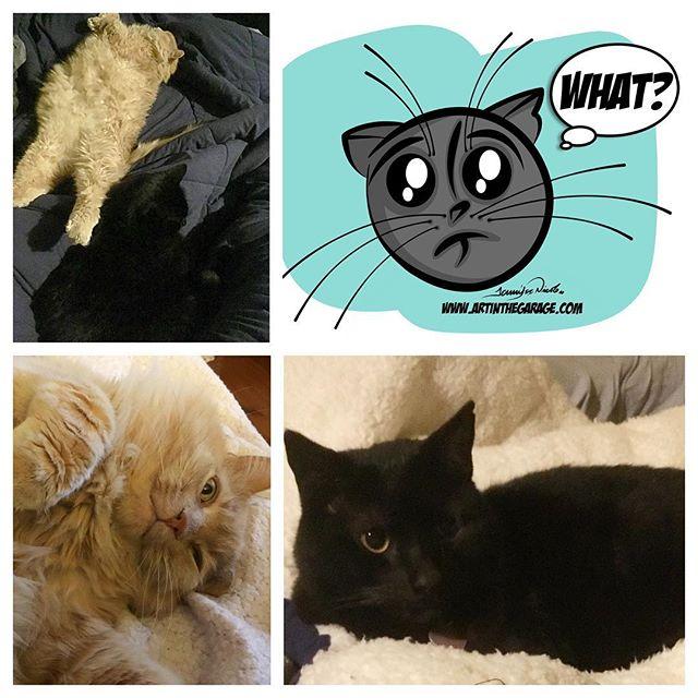 2-21-17 Cat Atrocity