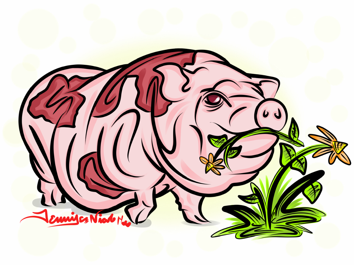 1-28-14 Pot Belly Pig Finished.png