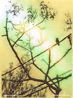 4-6-16 Pretty Bird