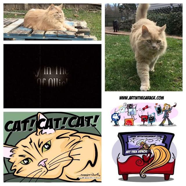 4-6-17 Cat! Cat! Cat!