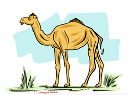 1-30-15 Camel Clipart