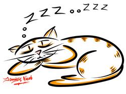 1-28-13 Sleeping Cat