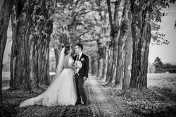 Sposi nel viale alberato