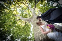 Bacio sotto l'albero