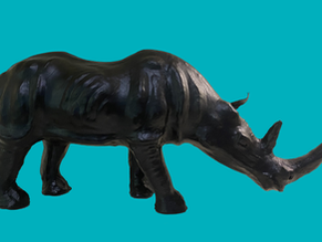 What Does a Rhino Do During a Pandemic?