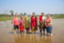 Women planting rice in Sauraha, Nepal