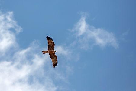 Flying eagle at Ngorongor Crater | Tanzania | Shots and Tales